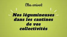 Offre cantines